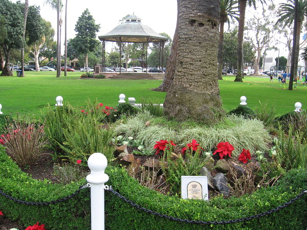 The small June Miller Garden at the base of a tall palm tree in Spreckels Park. The gazebo in the background is the setting of Concerts in the Park during the summer.