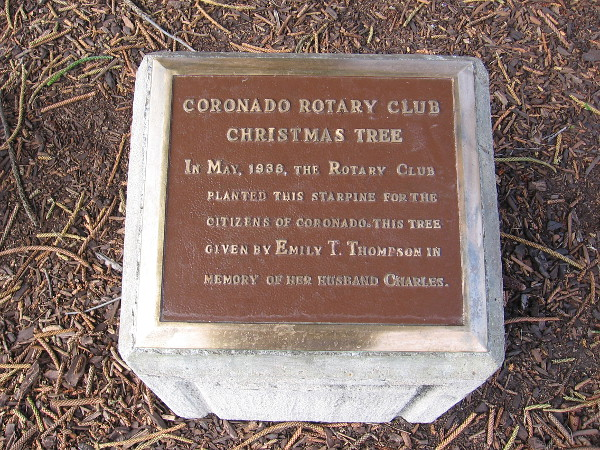 In May, 1936, the Rotary Club planted this starpine for the citizens of Coronado. This tree given by Emily T. Thompson in memory of her husband Charles.
