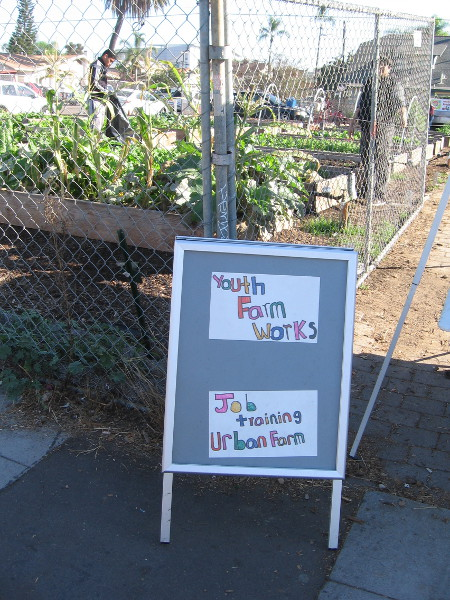 Sign by the large vegetable garden reads Youth Farm Works - Job Training Urban Farm.