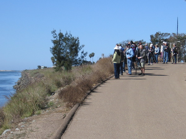 People enjoying the annual Bird Festival at Marina Village have walked to the San Diego River Estuary where many aquatic birds congregate.