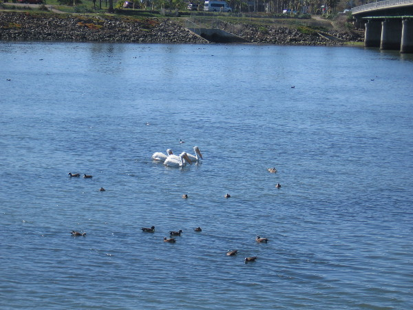 The San Diego Audubon Society offers many birdwatching opportunities. The organization also has a conservation program.