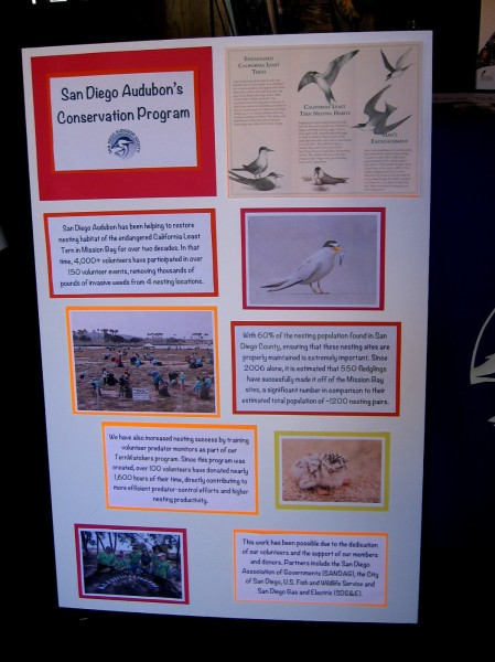 Poster at the Bird Festival shows how the San Diego Audubon Society is helping to restore the nesting habitat of the endangered California Least Tern in Mission Bay.