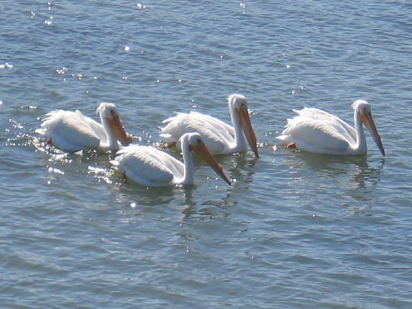 Another very cool sight on the San Diego River!