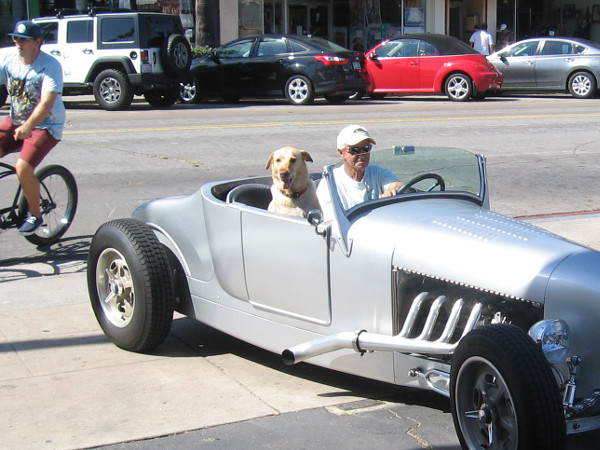 A dog takes a ride in a cool hot rod in Ocean Beach.
