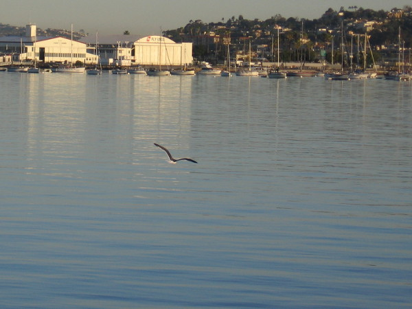 A gull passes over smooth water one morning, as the Coast Guard station shines in early sunlight.