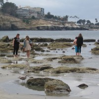 A beach walk to La Jolla Shores tide pools.