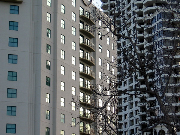 Patterns created by the shining windows of the Embassy Suites, the Park Place Condominiums and bare branches.