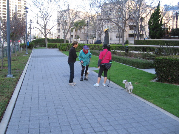 Having a friendly chat while walking the dog on the Martin Luther King Jr. Promenade.