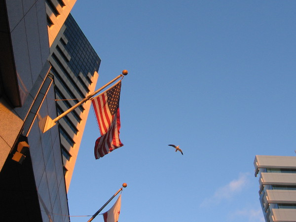 A gull soars above downtown San Diego buildings.