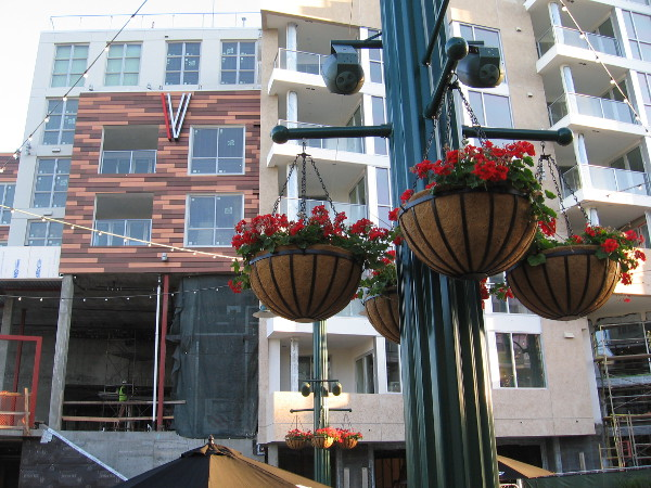 Flowers, warmth and beauty await one and all in Little Italy.