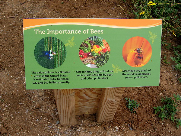 Bees are extremely important. More than two thirds of the world's crop species rely on pollinators.