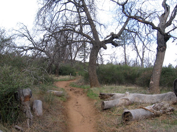Many fallen tree limbs and trunks were along the trail. Victims of wildfires, beetles, and violent mountain storms.