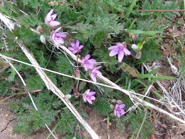 I saw a few small flowers along the trail scattered by spring's fingers.