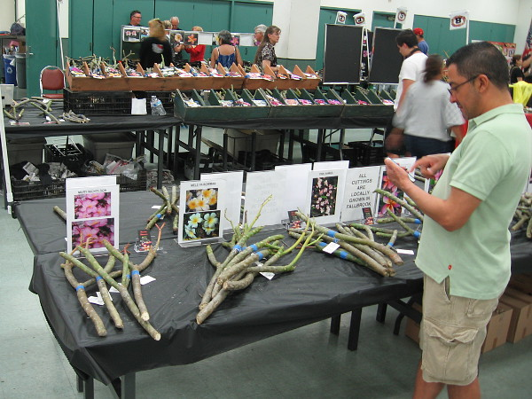 The Southern California Plumeria Society was having their annual cutting sale inside the Casa del Prado. I learned they'll have many more cuttings at the upcoming Fiesta Botanica event in Balboa Park.