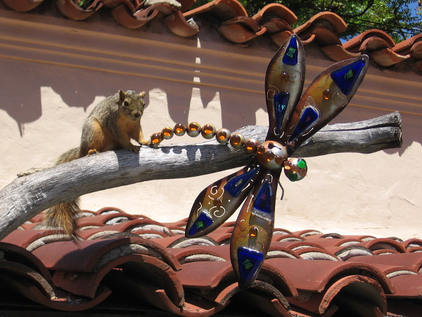 A park squirrel seemed fascinated by this dragonfly sculpture at the edge of a rooftop in Spanish Village.