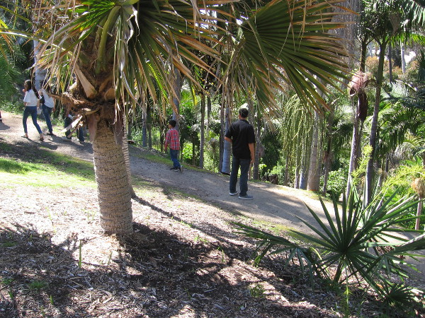 Some people emerge from a walk through green Palm Canyon.