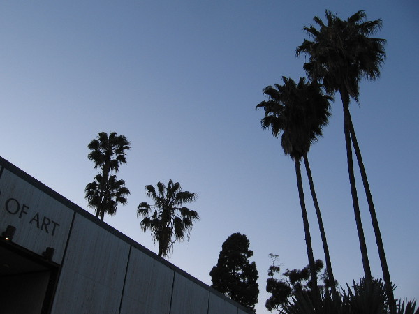 Darkening palm trees above the Timken Museum of Art in Balboa Park. Perhaps some bats are hanging out in these.