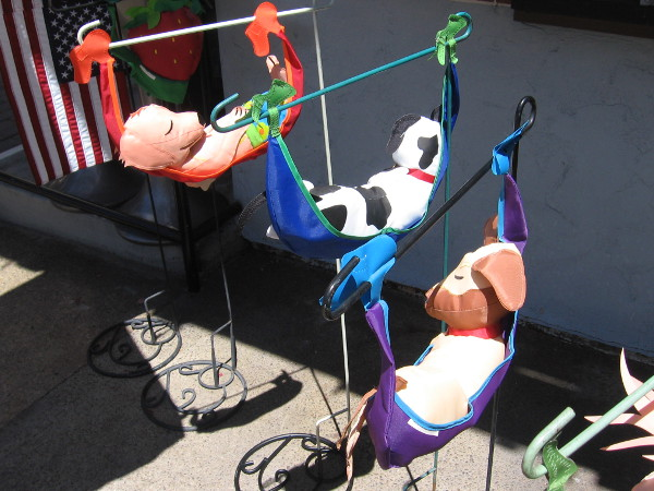 Three lazy dogs in hammocks. It's not quite the dog days of summer--not yet!