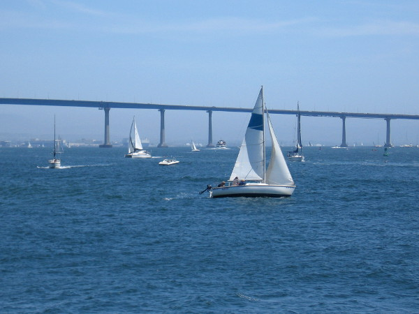 Lots of sails between blue sky and gentle San Diego Bay.