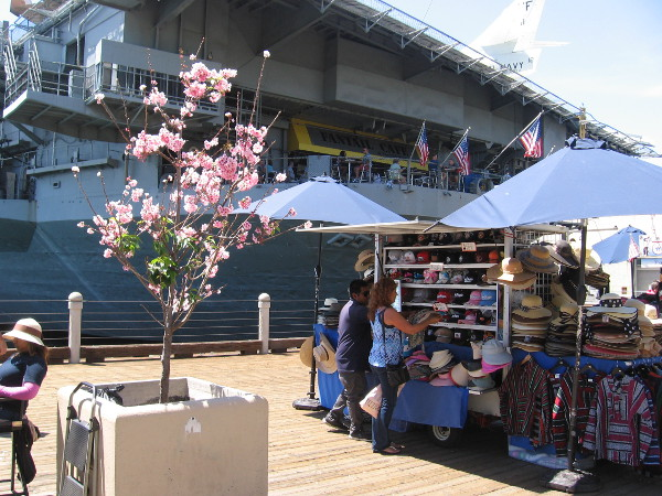 Beautiful spring blossoms by the USS Midway.