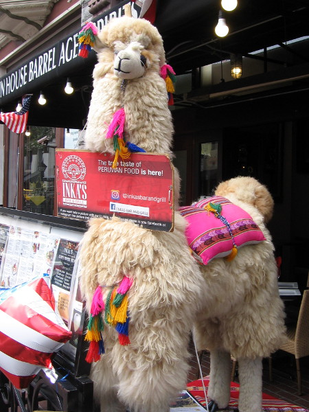 I'm not sure if this is a fluffy llama or alpaca. It stands guard in front of Inka's Bar and Grill in the Gaslamp.