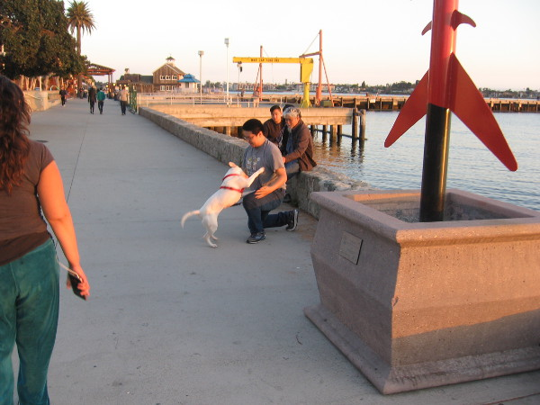 A dog plays with someone near the base of Fish Tree, by artists Zbigniew Pingot and Toby Flores, from the Urban Trees 2 waterfront exhibition years ago.