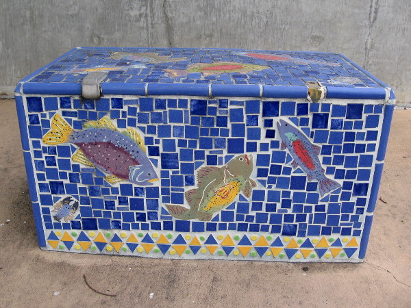 A small school of beautiful fish swimming in blue tiles.