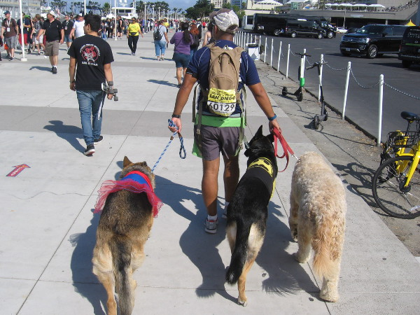 Some cosplay pooches are part of the big spectacle.