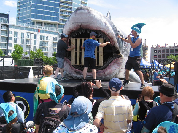 I arrived in time for a Sharkzilla feeding. The huge shark is going to chomp on a wooden pallet!