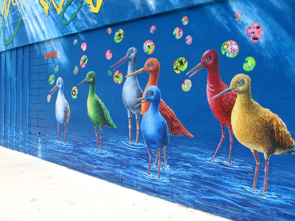 And lots of super colorful shore birds.