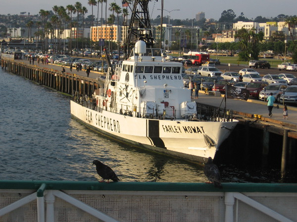 Photo from the Steam Ferry Berkeley of Farley Mowat which is now docked in San Diego. Sea Shepherd's vessel will soon return to the Sea of Cortez to protect the vaquita.