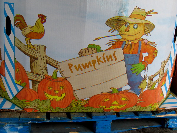Pumpkins are beginning to arrive at grocery stores. This outdoor bin was still empty a couple days ago, but ready.
