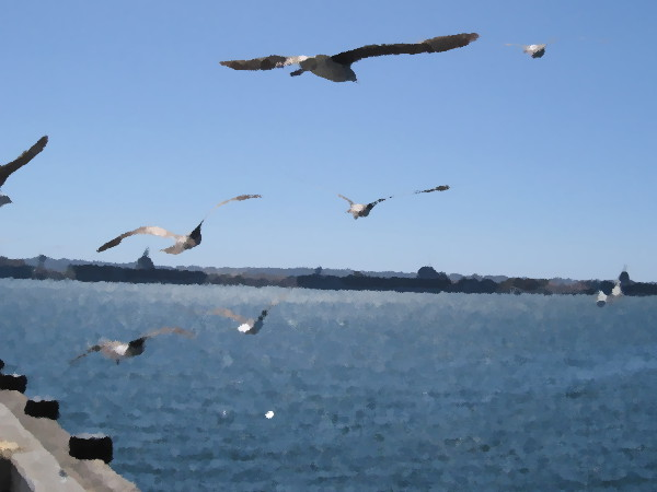 Seagulls fly above San Diego Bay.