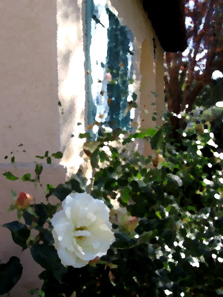 A flower and window at the International Cottages in Balboa Park.