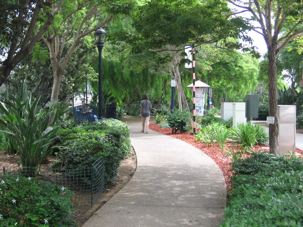 A lush linear park on Cortez Hill, called Tweet Street, has become more and more beautiful with the help of community volunteers!