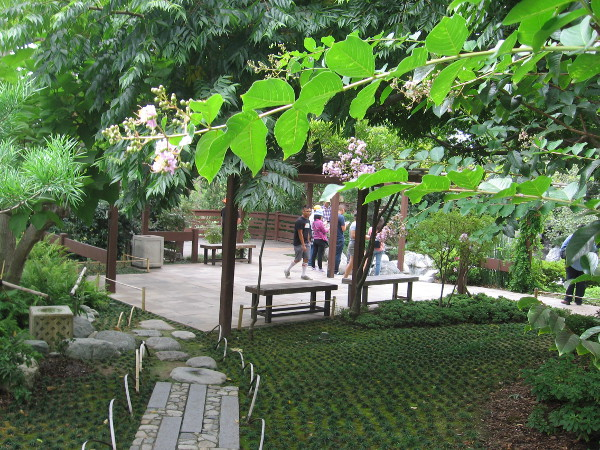 People enjoy the beauty near the Japanese Friendship Garden's Koi Pond.