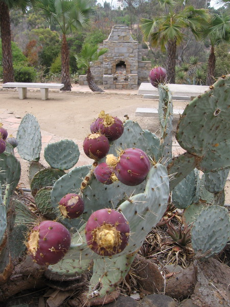 On Labor Day, like most days, the 1935 (Old) Cactus Garden in Balboa Park is a quiet place for solitude.
