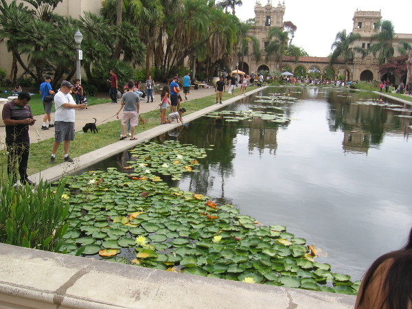 Young and old enjoy the famous beauty of Balboa Park's lily pond.