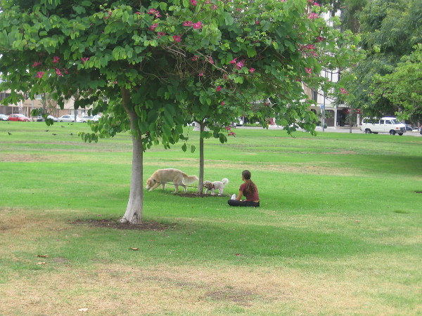 A quiet moment on Balboa Park's broad, green West Mesa.