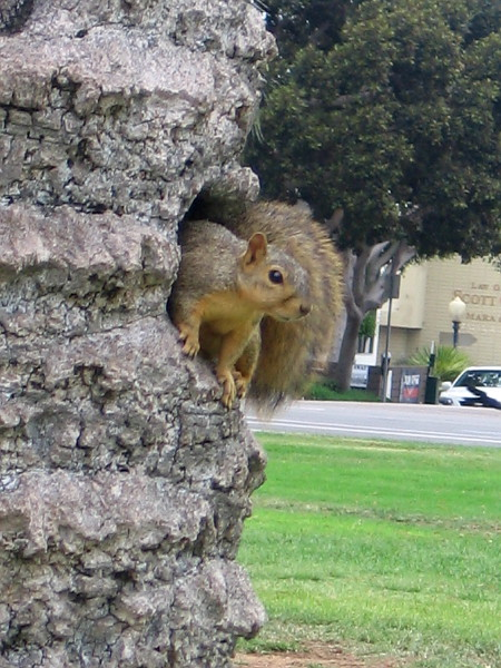 This squirrel had no notion it was Labor Day. It was just another day in the park.