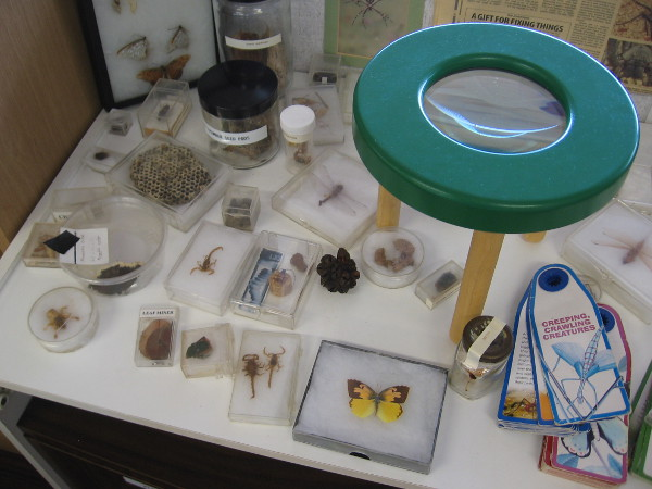 Visitors can closely examine lagoon insects and other creeping, crawling creatures.