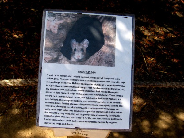 Nearby sign explains the wood rat's den. Also called pack rats, they build complex houses with various chambers.