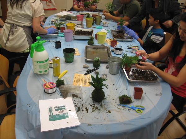 People make Kokedama, Japanese traditional moss art! The roots of small plants are bound in living moss!