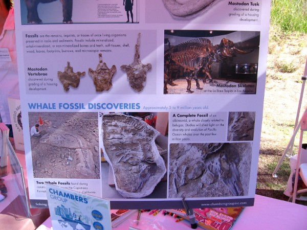 Chambers Group had an interesting poster concerning fossil mastodons and whales.