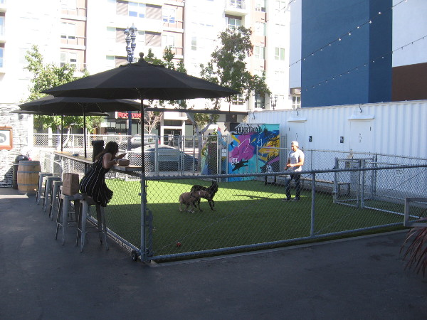 This small area in one corner of the the container park Quartyard is perfect for pet lovers who live in the neighborhood.