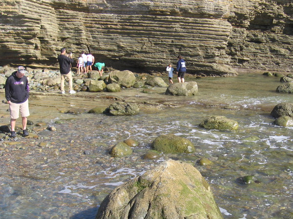 As low tide nears, people look about the rocks and shallow water for signs of sea life.