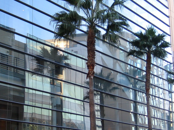 Palm trees reflected in the glassy, very modern Omni San Diego Hotel.