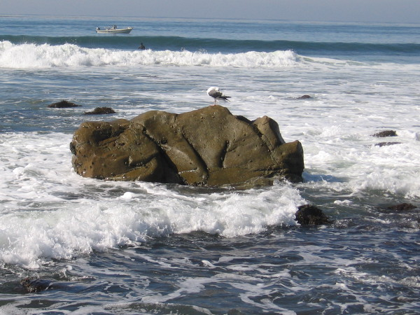 A gull stands upon one of the larger rocks.