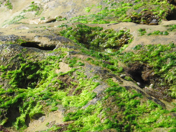 Bright green algae grows on the exposed rock's surface.