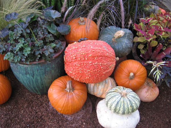 Autumn seasonal display in the Botanical Building features pumpkins arranged among plants and flowers.